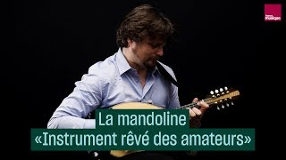 La mandoline par Vincent BeerDemander  CulturePrime