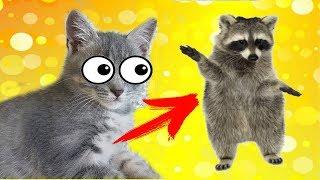 Кот Макс оказался ЕНОТОМ! Утро наших животных. Котенок Макс и щенок Алиса играют