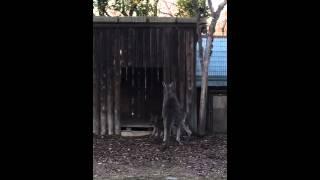 先日、埼玉県こども動物自然公園に行った時に撮影しました。 カンガルー...