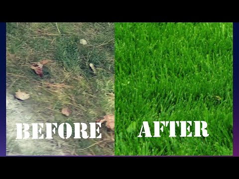 Lawn Repair |: How to fix a patchy lawn with poor soil, moss and less than 3 hours a day of sun