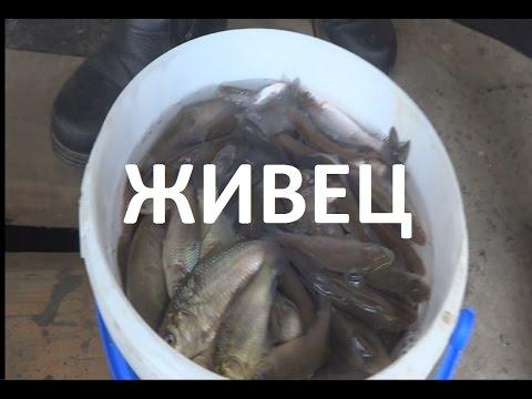 как сделать жерлицы для ловли рыбы