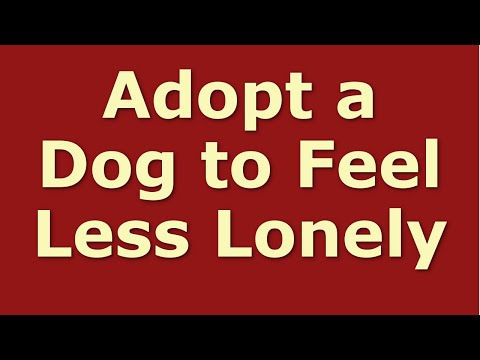adopt-a-dog-to-feel-less-lonely-|-dogs-cure-loneliness-and-depression