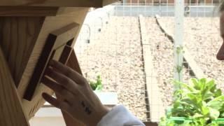 Des ruches urbaines à l'UQAM