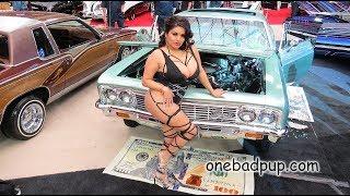 Onebadpup.com