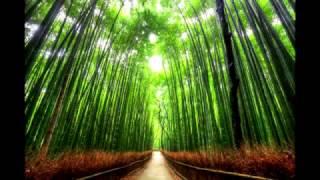Самые Необыкновенно красивые деревья всего мира/The most unusual trees in the world