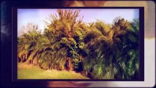 Florida Palm Tree Farm For Sale