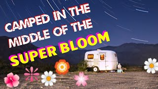 Camped in the Super Bloom! Anza-Borrego Desert State Park