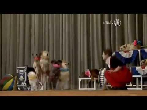 Dog Circus Aims to Push Adoption Option