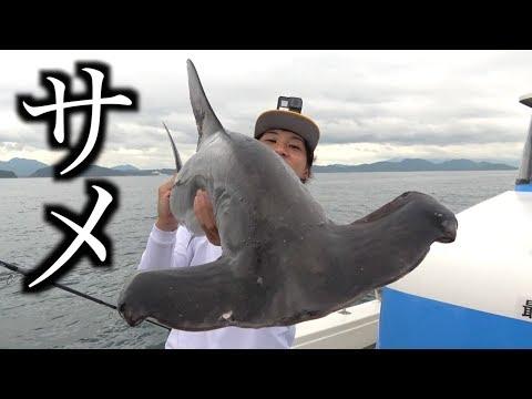 青物パラダイスの中サメが現れた!!