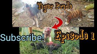 Tiger Pride(EP1)~4,000 Subscriber Series~