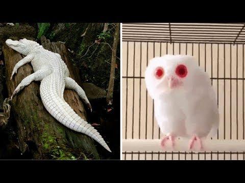 10 Loài Động Vật Bị Bạch Tạng Vô Cùng Dễ Thương
