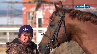 Рыжие  Гнедые  Вороные  Лошади СХП Новомарьевское