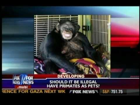 Chimp Attack - Fox News Feb 2009
