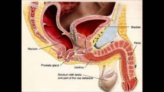 How to Get Rid of a UTI  | home remedies for uti | urinary tract infection
