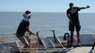 Operation Milagro III: Illegal Gillnets