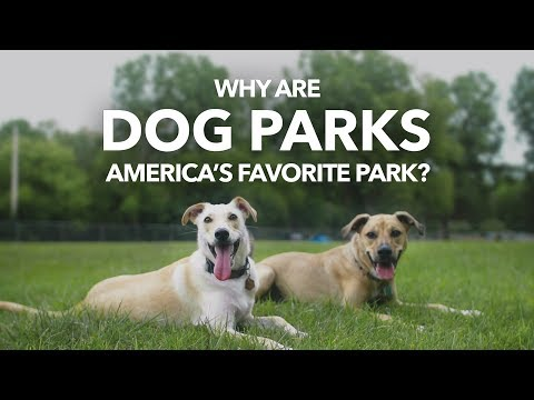 Why Are Off-Leash Dog Parks So Popular? | MEDC