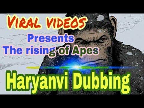 Madlipz haryanvi/the rising of apes