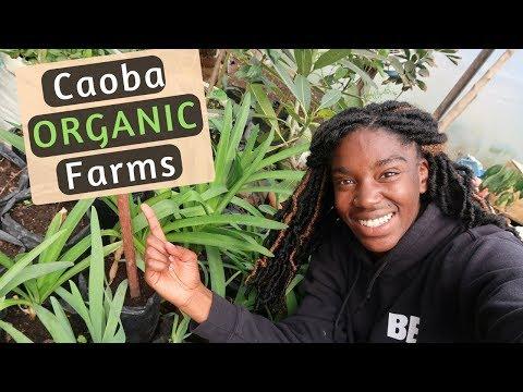 Caoba Organic Farms | Antigua, Guatemala