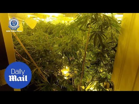 Inside The Hydro House In Sydney Filled With Cannabis