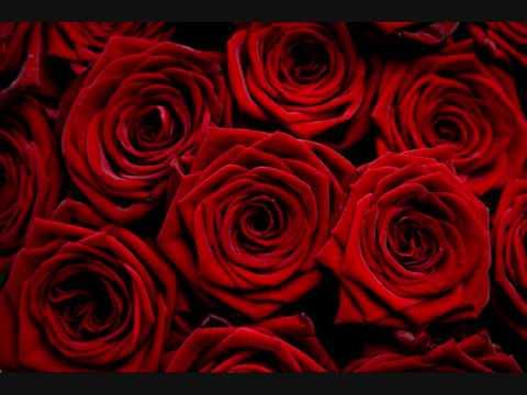 Flowers are red- Zain Bhikha