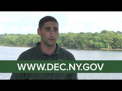 Work for DEC as an Environmental Engineer