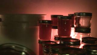Jarring 20 Pounds of Honey -- ASMR -- No Speaking, Clicking, Close-Up, No Talking, How To