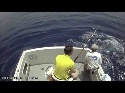 Potential Junior World Record Blue Marlin Released By 14 Year Old Luke Kilgour From England