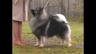 Keeshond  Wolfspitz  AKC dog breed series