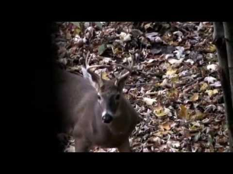 Ohio Hunting Lease - Ohio Hunting Property - Ohio Deer