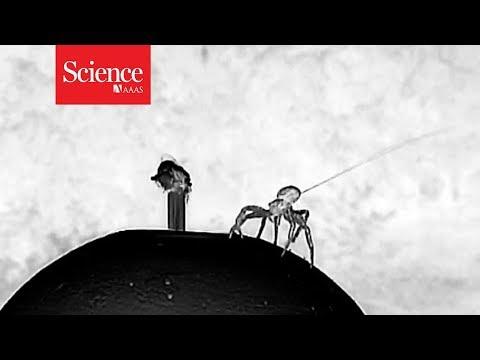 Watch a 'ballooning' spider take flight