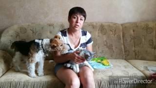 Стерилизация кошки и собаки//ПОСЛЕОПЕРАЦИОННЫЙ УХОД