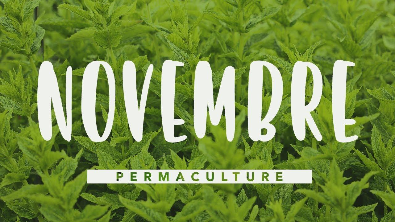 Que Faire Dans Son Jardin Permaculture En Novembre Permaculture