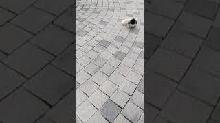 단추 산책훈련중!!