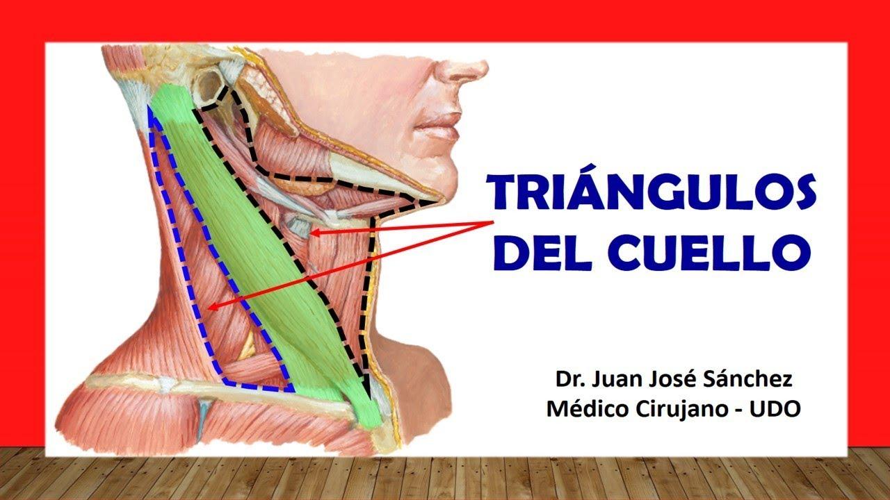Cuello 1 - Triángulos del Cuello Fácil y Sencillo - YouTube