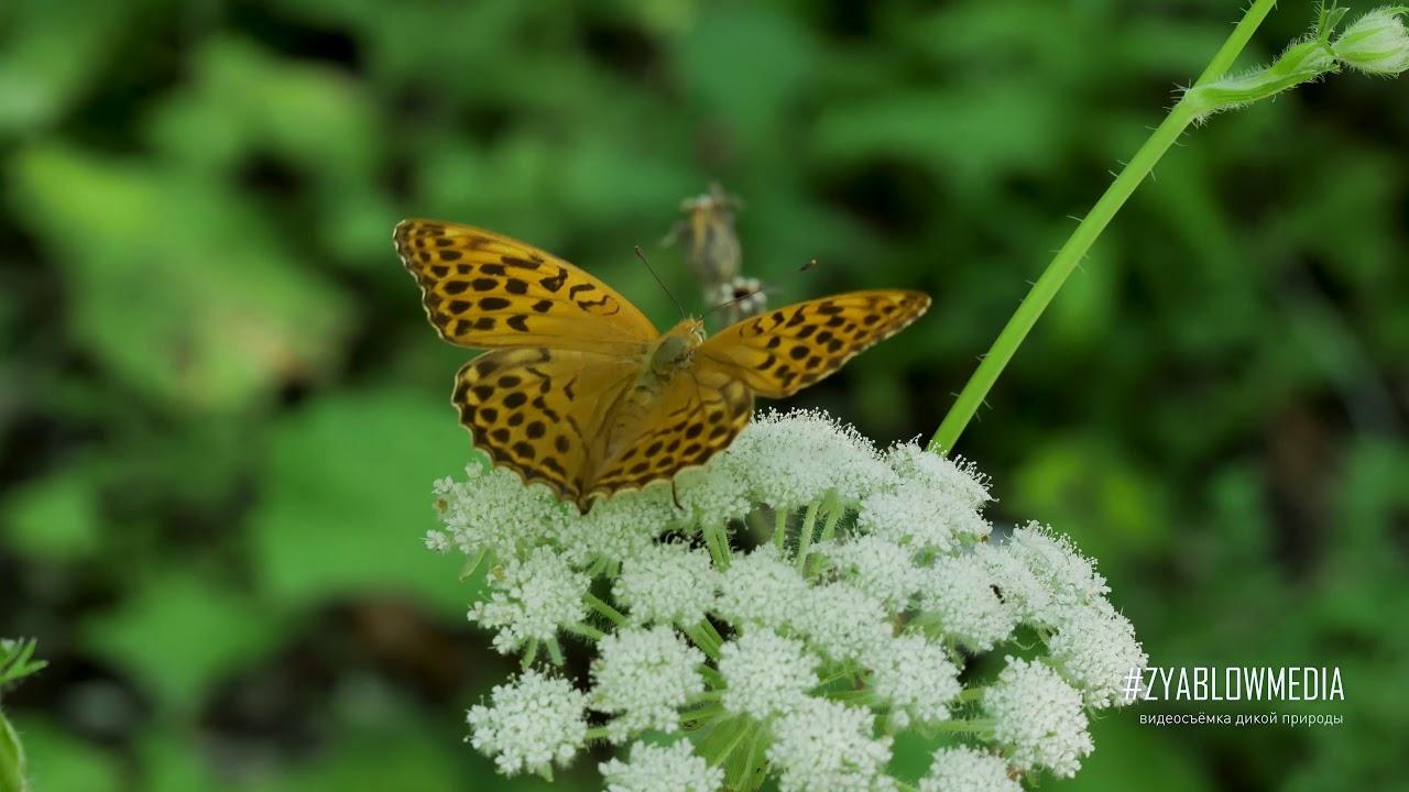Nature 4K Videos wild nature of the Caucasus  | Кавказ - дикая природа России 4K | Zyablowmedia
