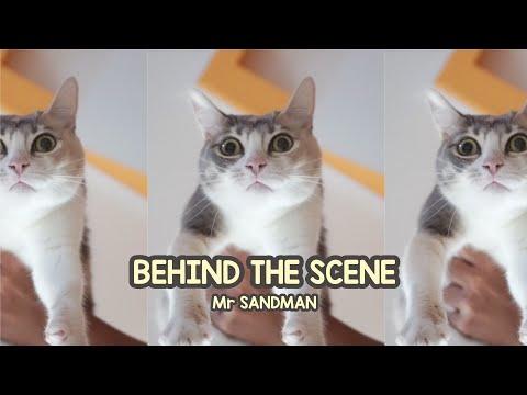 Mr. Sandman Cat Challenge Behind the Scene! - MewPawmily Keluarga Kucing