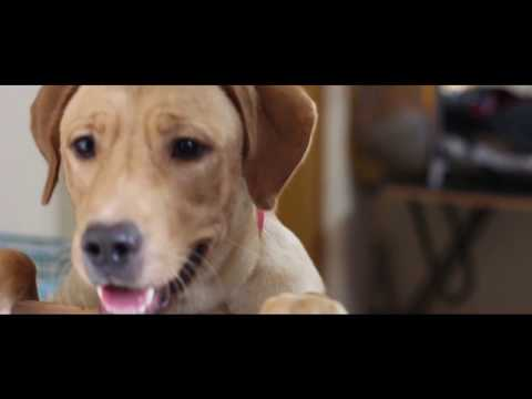 Dogs Training Videos   Dog Videos   Pets At Home   Dogs Playing   Labrador Dog Training   Pixi