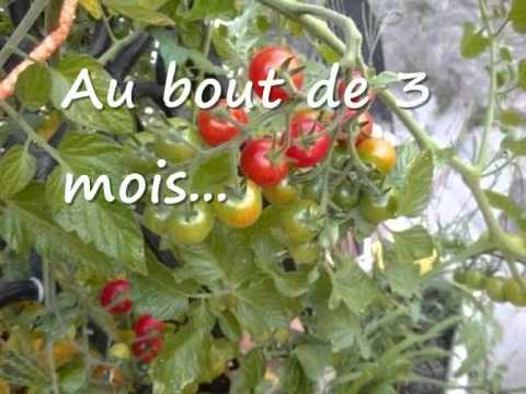 faire pousser des tomates cerise sur son balcon youtube. Black Bedroom Furniture Sets. Home Design Ideas