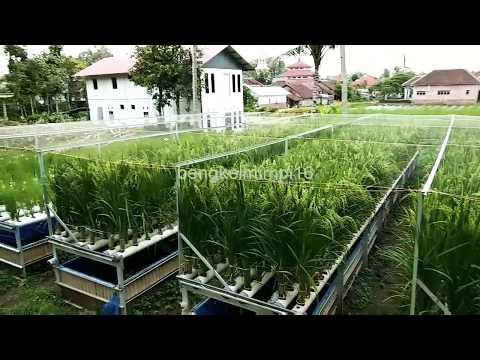 inovasi pertanian padi bengkelmimpi16 Mp3