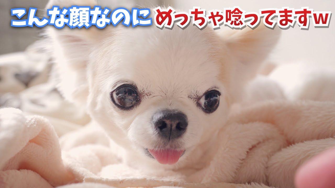 表情一つ変えずに唸りをあげる、笑いながら怒る竹中直人みたいな犬ですw