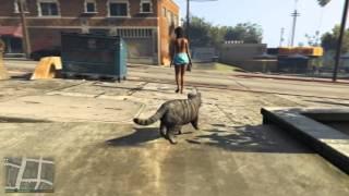 GTA 5 - A life of a Cat