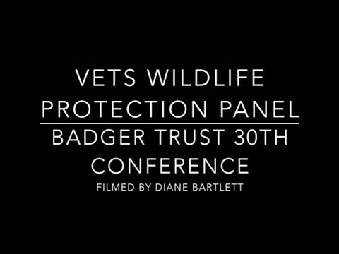 Vets Wildlife Protection Panel - Badger Trust Conference 201