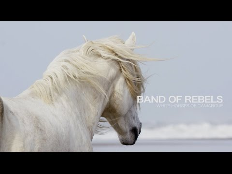 Band of Rebels: White Horses of Camargue