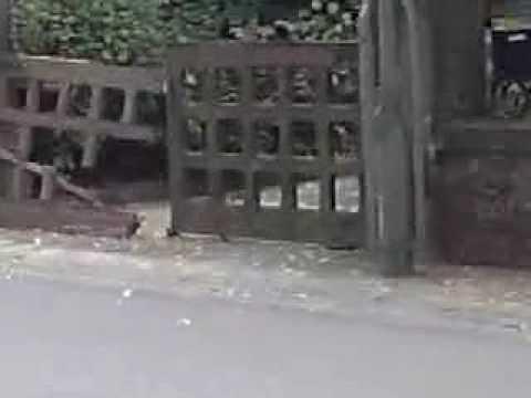 Senseless Videos - Destroyed portal
