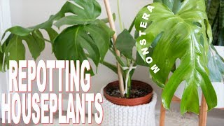 How to Repot a Houseplant | Repotting my Monstera Deliciosa (cheese plant)