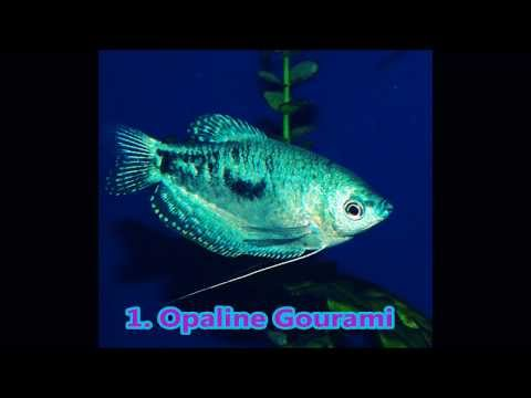 The Best Hardy Fish To Add To Newly Started Aquariums