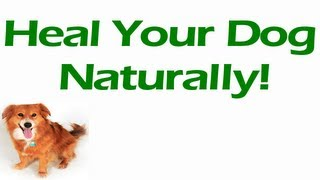 Dog Health Problems - Heal Your Dog Health Problems Naturally