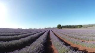 Lavendel-Farm in Tasmanien | Virtual Reality (VR) / 360°-Video