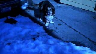 dying neglected abused dog worst treated dog in the world freezing to death not funny