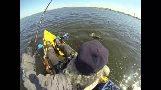 40 inch striped bass on Eposeidon Super Power 8+ Advanced Multicolored Braid Fishing Line